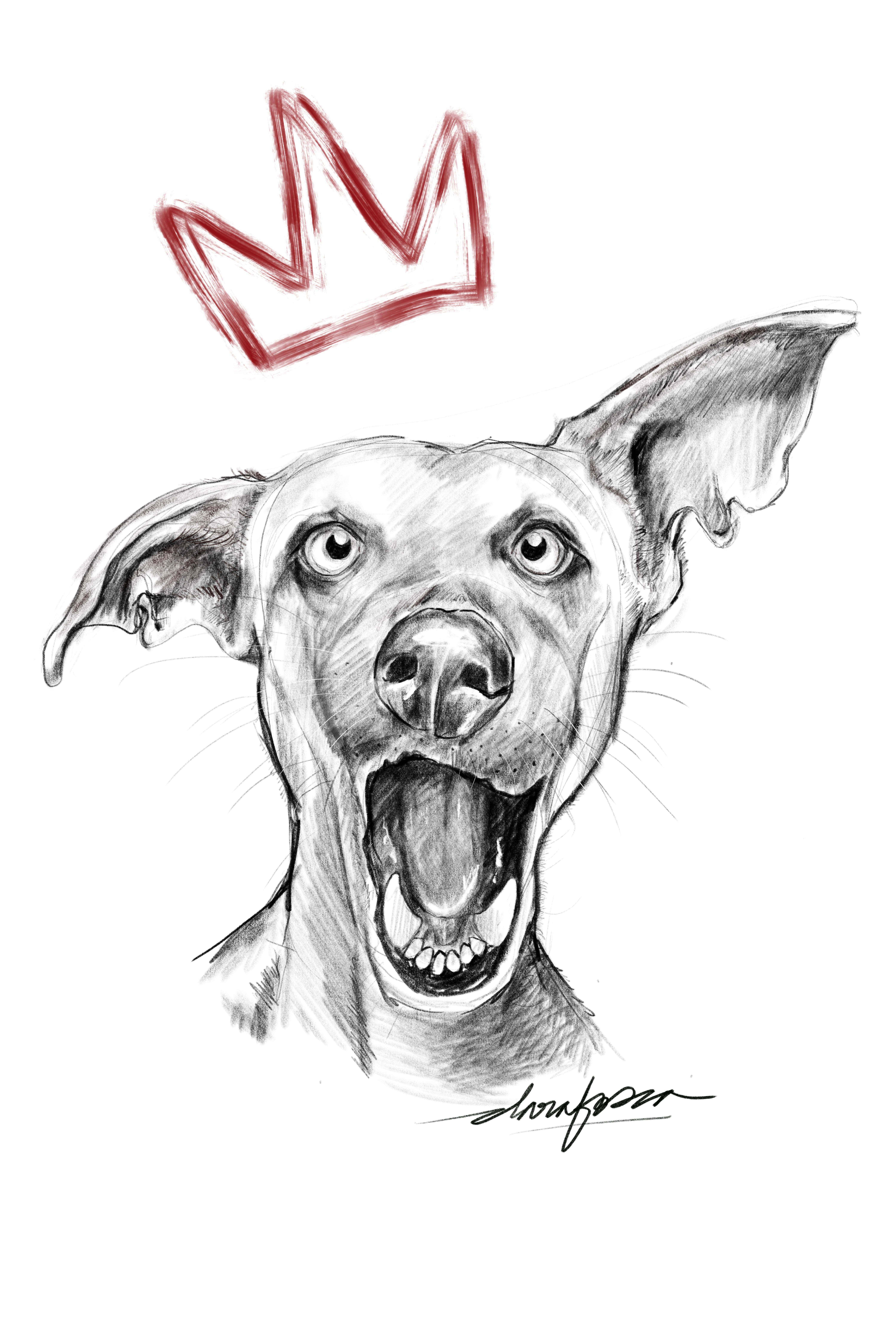 Dog_King